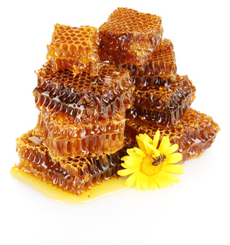 sweet honeycomb with honey, bee on flower, isolated on white